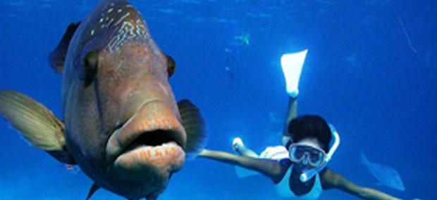 凯恩斯-大堡礁-诺曼礁-潜水-必玩-大冒险号